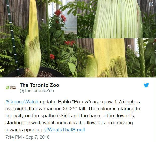 توئیت گل جسد باغ وحش تورنتو