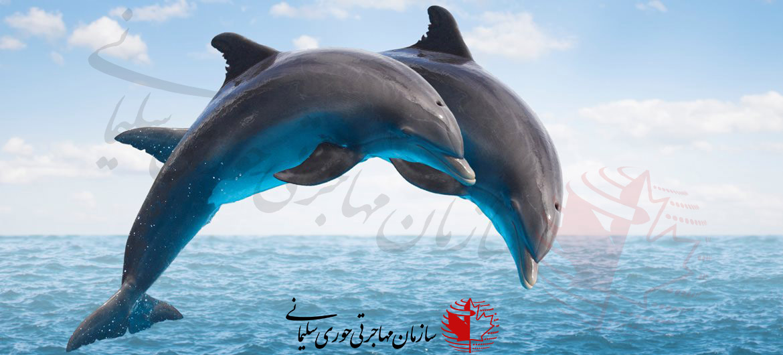 کانادا برای حمایت از حیوانات
